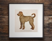 FRAMED Goldendoodle Labradoodle Doodle graphic art pigment print in 20x20x1 HANDMADE frame signed Any Image 12x12 14x14 16x16