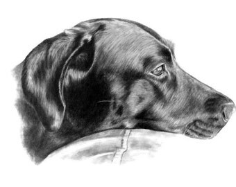Pet Portrait Custom Original Sketch Gift Idea for Pet Lovers