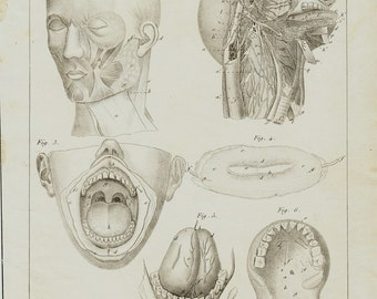 1840 Antique print of anatomy,  salivary glands, oral cavity, original antique 176 years old