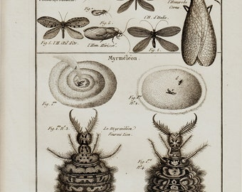 1793 Large Antique INSECT engraving, brown lacewings, Myrmeleon is an ant-lion, Panckoucke. Lamarck, Entomology. 222 years old