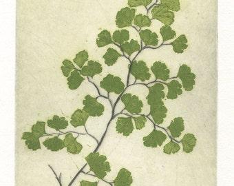 Maidenhair Fern, Original Fine Art Etching