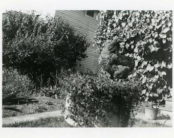 """Vintage Photo """"Find the Hidden Chicken"""" Weird Odd Hen Snapshot Antique Photo Black & White Photograph Found Paper Ephemera Vernacular - 182"""