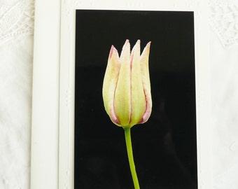 Pink Flower Bud Photo Notecard