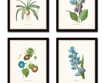 Blue Botanical Print Set No. 3, Redoute Botanicals,Art, Flowers, Prints, Antique Botanicals, Prints Sets, Giclee, Blue Flower Prints