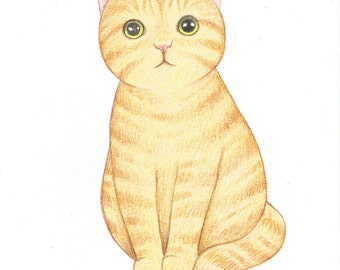 ON SALE 50% DISCOUNT, Ginger Tabby Cat Pencil Drawing, Original Cat Drawing, Cute Kitty Cat Illustration, Gift for cat Lovers