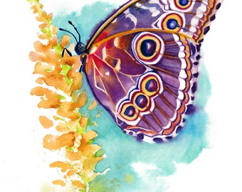 "5x7"" Butterfly Watercolor Giclee Fine Art Print [Watercolor Butterfly Portrait Print, Butterfly Print, Butterfly Art, Watercolor Art]"
