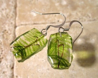 Moss (Rhytidiadelphus loreus) Earrings, woodland, forest, bryophytes, plant jewellery, leaf jewelry, Cracked Ice style, Surgical steel