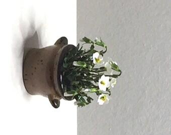 White Christmas Rose in  'Stoneware jar'  (GF64)