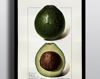 Antique Avocado Print Art Prints Poster Fruit Prints Home Decor Wall Art Wall Prints Kitchen Decor