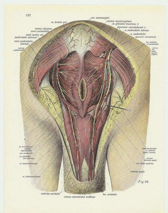 Anus Lithograph Anatomy Poster Anatomical By -2148