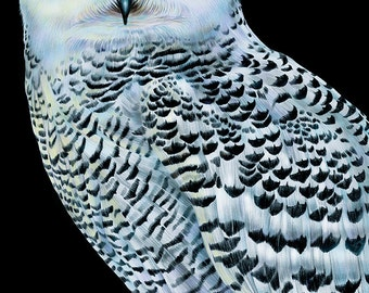 Snowy Owl Colored Pencil Drawing