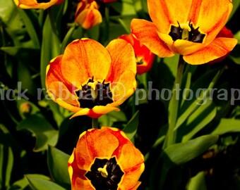 Tulips Photo Instant Digital Download Fine Art Photography Romantic Bedroom Bathroom Decor Orange Green Spring Printable Photo Mother's Day