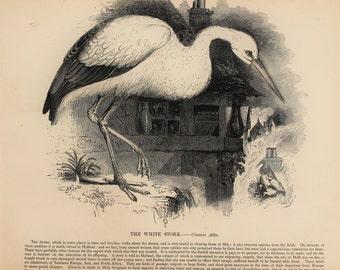 1840s Antique Bird Print, Large Black & White Wood Engraving, Antique White Stork Print
