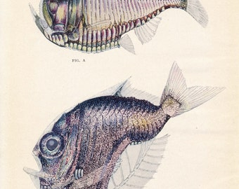 1926 Deep-sea Fish Antique Print