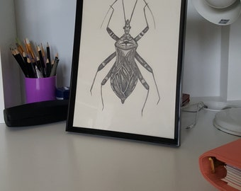 A4 Hand Drawn Assassin Bug Print, Scientific Illustration, Entomology
