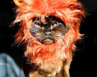 Lion Mane for cats in signature gift hat box
