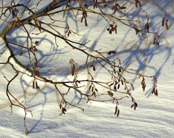 Greeting Card, Photograph, Winter Lace, Winter Scene, Fine Art Photography, Gift Idea, Snow, Home Decor