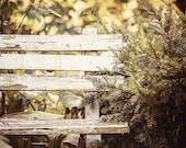 Rustic Decor, Farmhouse Decor, Beige Wall Art, Country Wall Art, Vertical Print or Canvas Wrap, Chipped Bench in the Woods, Autumn Decor.