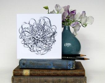 "Blank greeting card - Original botanical art pencil drawing of 'Clematis 'Andromeda' seed head printed in black ink on white 6""/15cm"