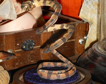 Wonderful Taxidermy Snake in Glass Dome