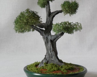 MB14 Miniature Bonsai tree in dark green planter