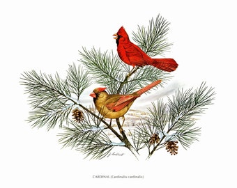 """A large print of the Cardinal painted by James Lockhart for the book Wild America. The bookplate is 15"""" wide and 12"""" tall."""