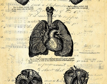 Heart Study vintage medical image doctor gift art print custom choice background from antique paper HS100