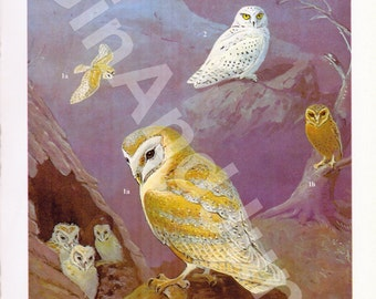 Colorful Owl Print - Barn Owl Print from The 1970's