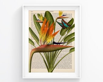 Bird of Paradise Flower Vintage Book Print, Wall decor, Wall Art Decorative Art Book Page Retro Poster Vintage Illustration Gift Poster 073