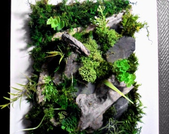 Vegetable painting, wall, plant frame, wall, frame, framework, organic artwork bark lichen green, vegetable design, green