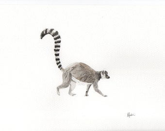 Ring Tailed Lemur Watercolour Print