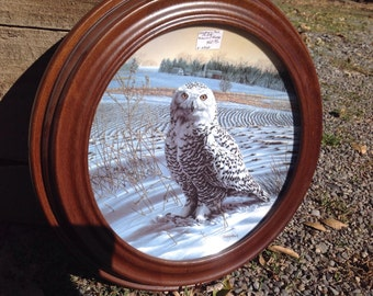 Snowy Owl collectable plate with walnut frame