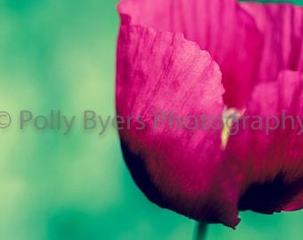 Single Beauty Poppy Fine Art Photography
