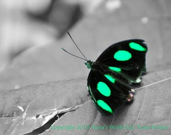 Green Glowing Dotted Butterfly 8x10 glossy photo print