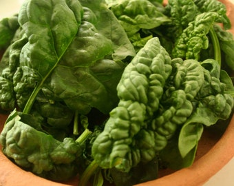 Bloomsdale Spinach (150 thru 5 LB seeds) Easy Grow Nutritious Heirloom!  #104