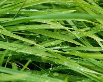 Dewdrops - Grass - Glendalough - County Wicklow - Republic of Ireland - Ireland - Photo - Print