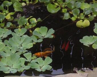 Fish Pond 2