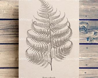 Fern print, Printable fern image, Botanical illustration, Fern art, Vintage graphics, Printable artwork, Fern clipart,  A3 PNG JPG 300dpi