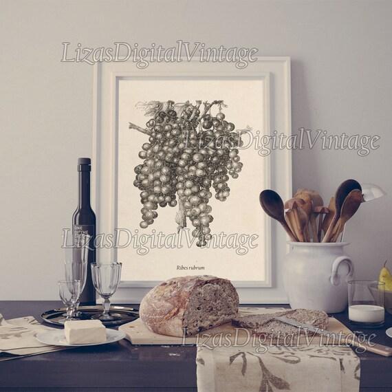 Kitchen art, Kitchen printable, Berries print, Kitchen wall art, Red currant, Kitchen print, Botanical print, 8x10, 11x14, A3 JPG PNG
