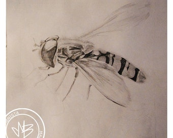 Fly - Episyrphus balteatus - fly, pencil art, insect original drawing