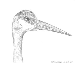 Sandhill Crane Giclee Art Print Made to Order