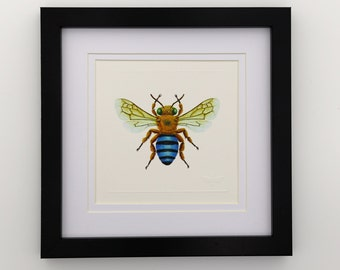 Blue-Banded Bee Miniature Unframed Print x 1