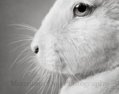 """Photographic Print of """"Hare Apparent"""""""