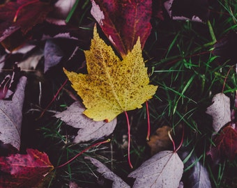 Foliage - Foliage Photo - Autumn - Fall - Autumn Leaves - Nature Photo - Digital Photo - Digital Download - Instant Download - Wall Decor