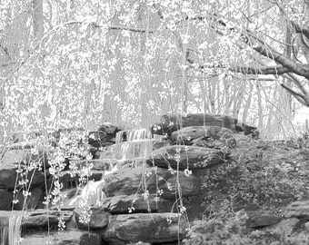 Waterfall and Cherry Blossoms In Black and White #199