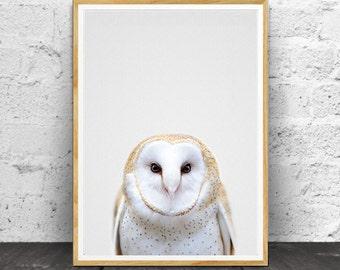 Owl Print, Nursery Animals,  Nursery Print, Nursery Animal Art, Nursery Decor, Animal Print,  Animal Wall Art, Nursery Wall Art, Nursery Art