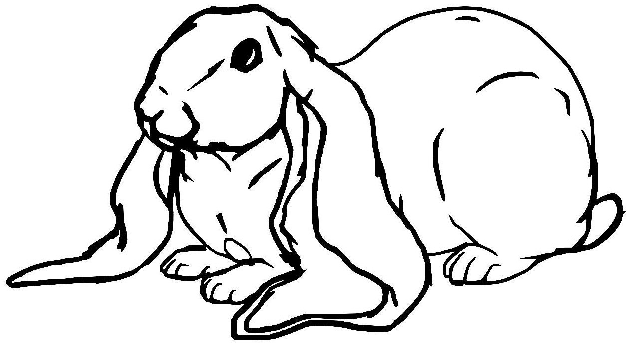 Velveteen rabbit and coloring pages ~ Velveteen / English Lop Rabbit Vinyl Decal by ...