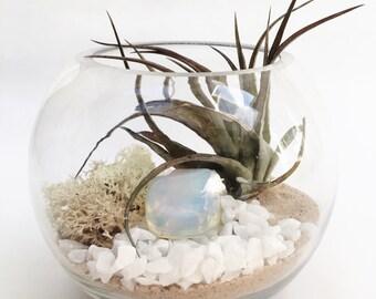 Libra October Opal Air Plant Terrarium Garden Kit • tillandsia birthstone crystal birthday personalize gift planter diy hanging globe boho