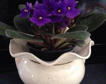 Self watering African violet planter