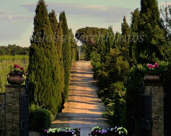 Tuscany, Cypress Trees, Dirt Lane, Flowers, Tuscan Wall Art